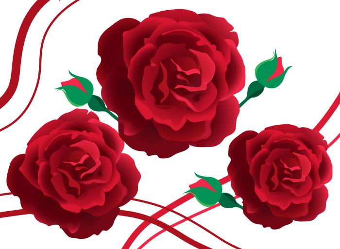 ruža, tienovanie hotové